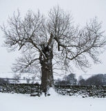 Snow in Wharfedale ...1