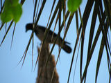 some of the trees