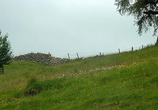 Tormentil (Potentilla-erect / cinquefoil) and cotton grass on the hill