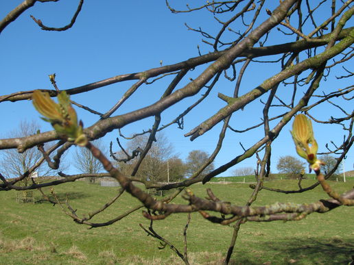 Trees by the Wharfe and blue sky