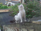 Cat On A Wet Felt Roof