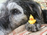 Doggy & Duckie