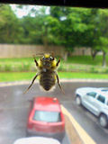 Window bee!