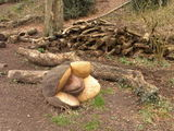 Woodland Sculptures