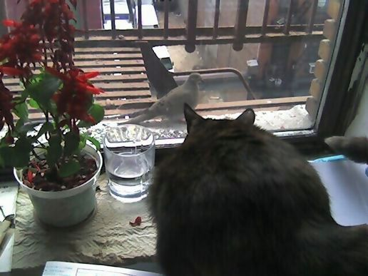 The Cat and The Dove