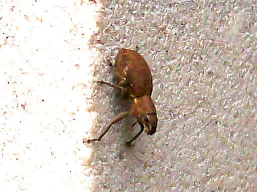 I have no idea what kind of bug this is. Looks like a squirrel in the face, though.