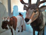 Ersatz Taxidermy Wonderland