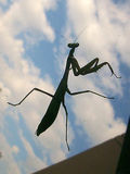 Mantis 1 of 4