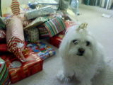Nelly guards the presents