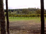 Rickety gate Winery