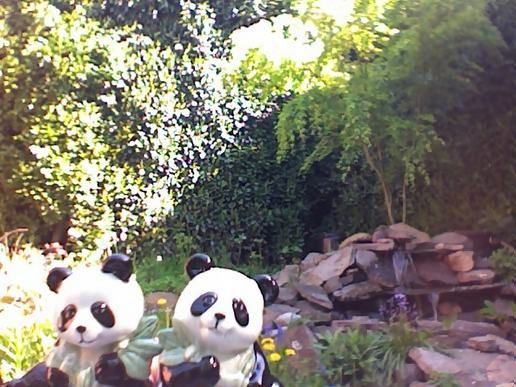 salt and pepper pandas in my back yard...
