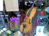 Window in Beauvais during the cello festival, by Audrey Poujoula